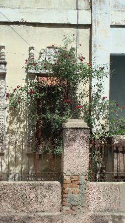 Hostal Colonial: Casa com rosas em Cienfuegos