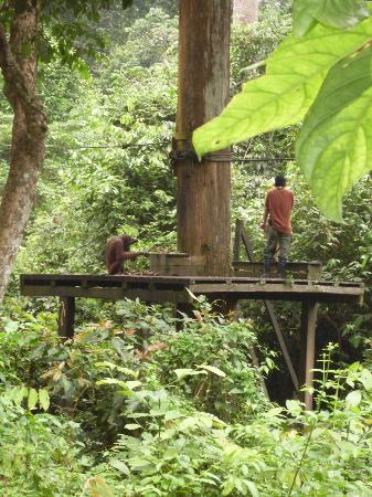 Sepilok Forest Edge Resort: ожидание