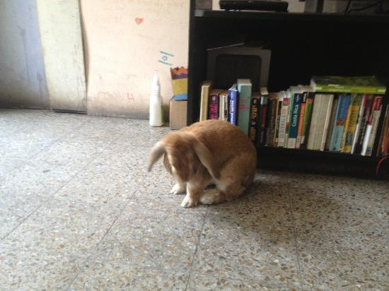 A Place to Stay Hostel: Resident rabbit, Lottie