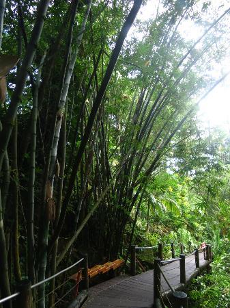 Hawaii Tropical Botanical Garden: Bamboo