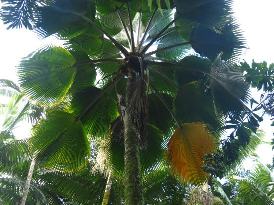 Hawaii Tropical Botanical Garden: Don't forget to look up.