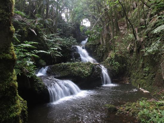 Hawaii Tropical Botanical Garden: A picturesque waterfall