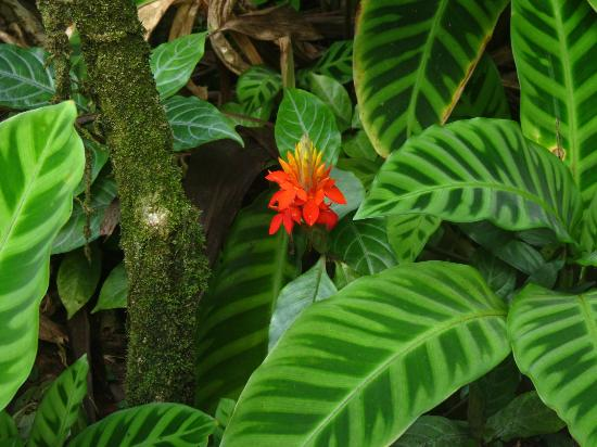 Hawaii Tropical Botanical Garden: Contrast