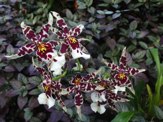 Hawaii Tropical Botanical Garden : Orchids 3