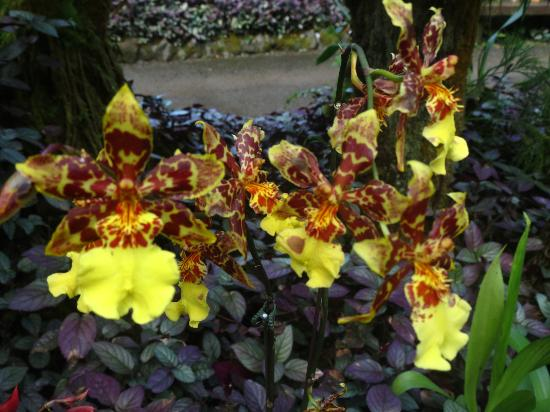 Hawaii Tropical Botanical Garden: Orchids 2