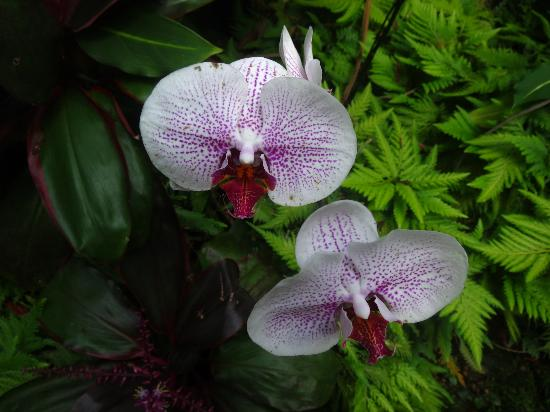 Hawaii Tropical Botanical Garden: Orchids1