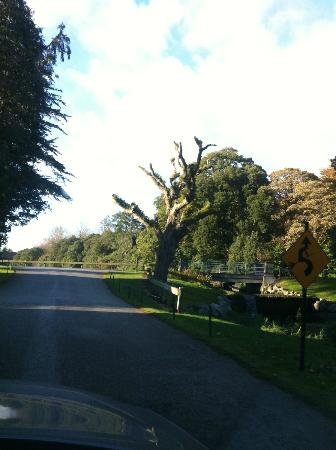 Castlemartyr Resort: there's a witch hanging from a tree!