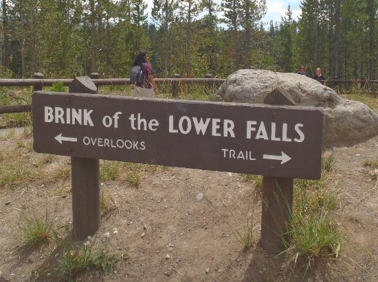 Grand Canyon of the Yellowstone: Brink of Lower Falls