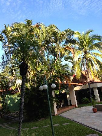 Best Western Plus Hotel Terraza: Palms beside the pool