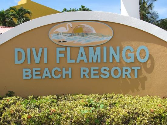 Divi Flamingo Beach Resort and Casino : Divi
