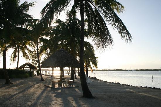Coconut Palm Inn: Hotel grounds
