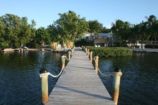椰子棕櫚酒店照片