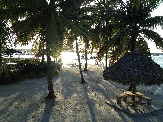 Coconut Palm Inn: Hotel grounds