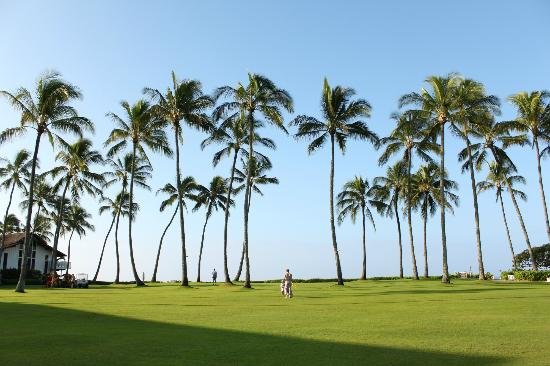 Kiahuna Plantation Resort: open space on the hotel grounds