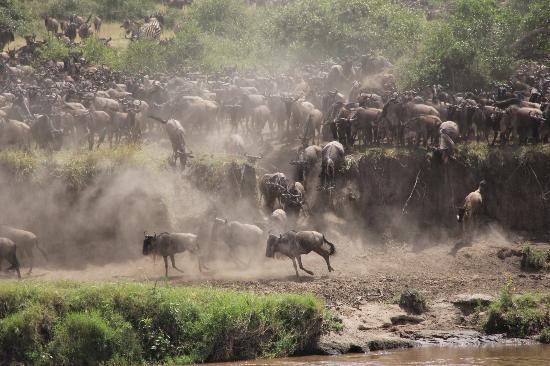Ubuntu Camp, Asilia Africa: Wildebeest Migration