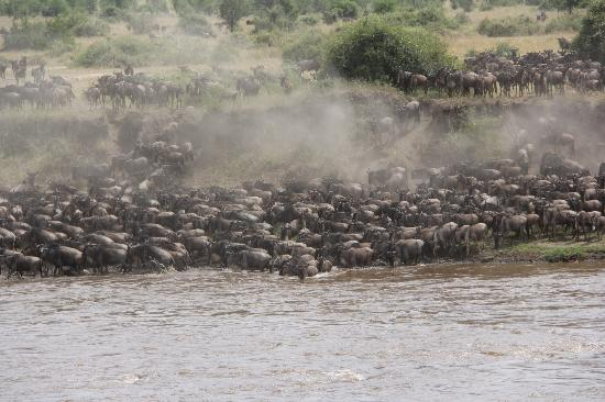Ubuntu Camp, Asilia Africa: Wildebeest Crossing