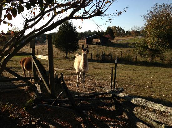 Sunrise Farm Bed and Breakfast: More farm friends