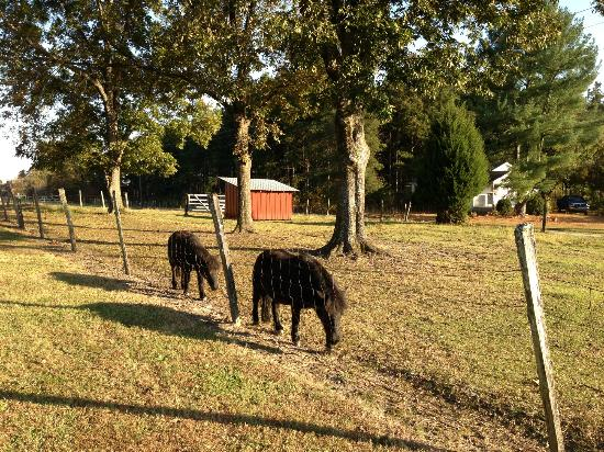 "Sunrise Farm Bed and Breakfast: ""Neigh""bors"