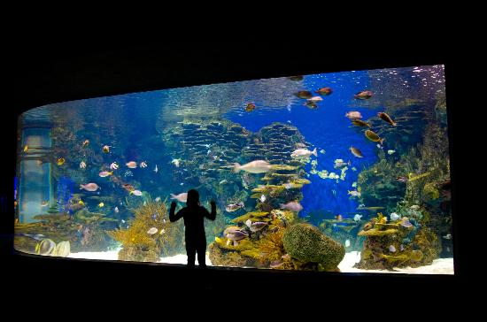 Huge Fish Tank Picture Of Ripley 39 S Aquarium Of The