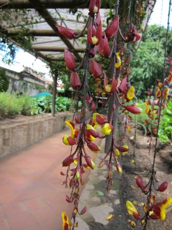 Casa Santo Domingo: Lovely flowers and canopy on the grounds