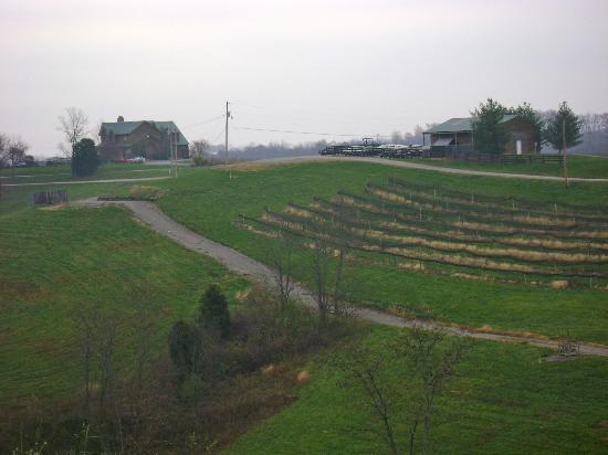 Elk Creek Vineyards: View from the Estates Lodging