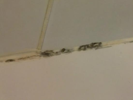 Globetrotters Tourist Hostel: everywhere mould in the bathroom