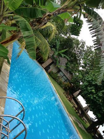 كوكوتينوس مانادو أبوتيك دايف ريزورت: pool