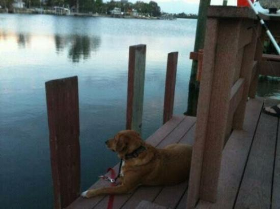 Bayview Plaza Waterfront Resort: bailey on the dock