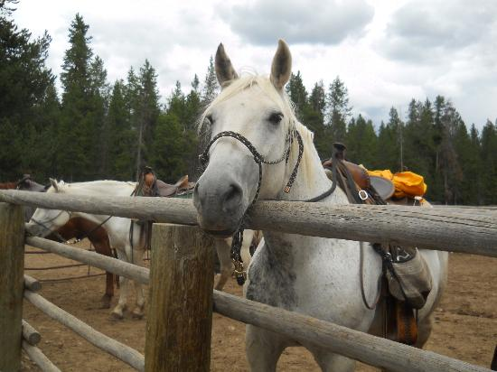 Jackson Lake Lodge: Horses at Coulter Bay