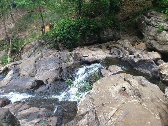 Verdure Wayanad: water stream inside the coffee estate