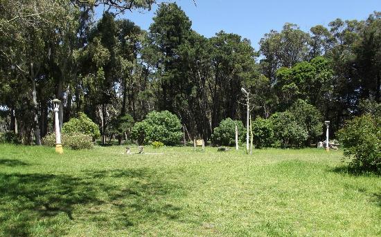 Necochea, Argentinien: Un Rincón del parque