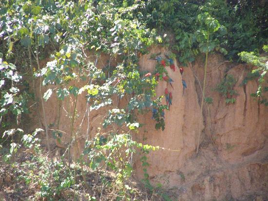 Refugio Amazonas: Macaws