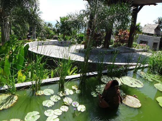 Bhundhari Spa Resort & Villas Samui: Lobby landscape pond