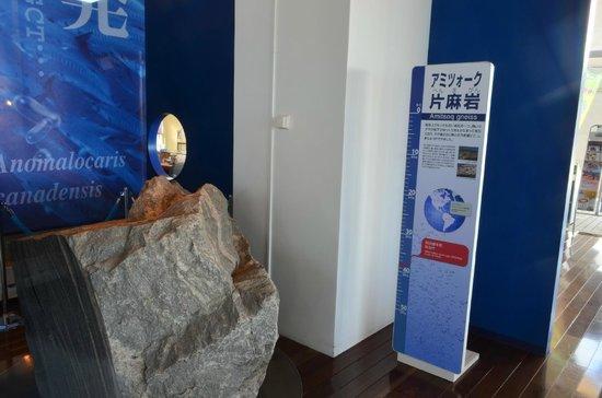 Gamagori Museum of Earth: 生命の海科学館・片麻岩の展示品