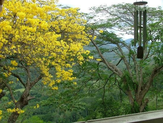 Halgolla Plantation Home: Flowering Tree
