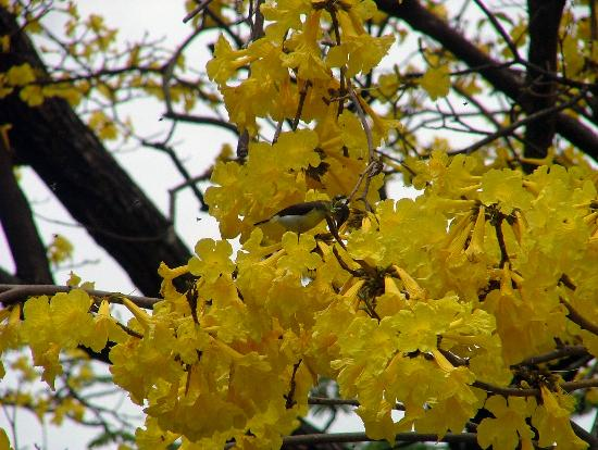 Halgolla Plantation Home: Bird in Flowering Tree