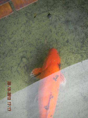 Grand Palladium Punta Cana Resort & Spa: El pez curioso
