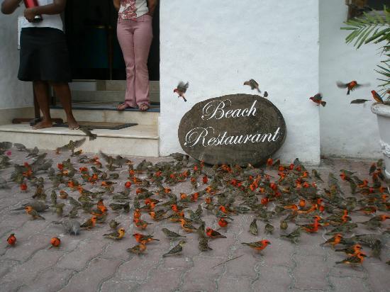Village du Pecheur: Заходите в гости к нам