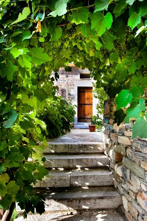 Amanita: the vine tree