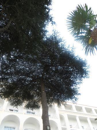 Grand Hotel Quisisana: Garden!