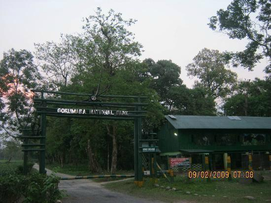 B&B'er i Gorumara National Park