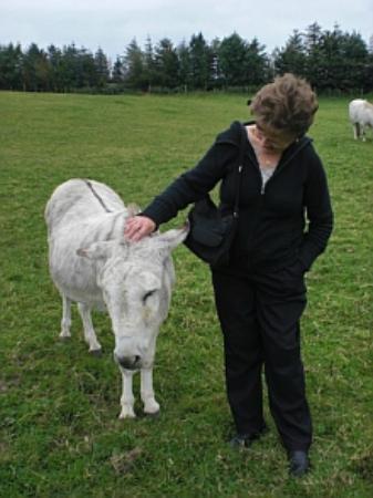 Ballynary, Irlandia: Meet the locals :)