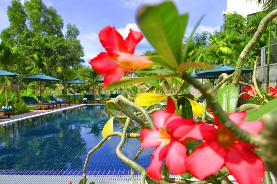 La Magnolia d'Angkor Boutique: Swimming Pool