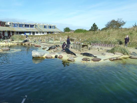Seehundstation Friedrichskoog: Tiertraining bei blauem Oktoberhimmel