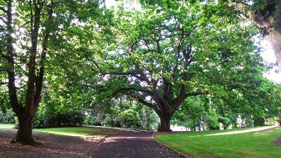 Comfort Inn Botanical: gardens