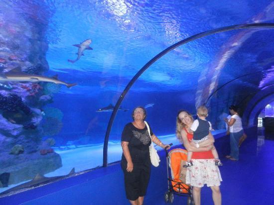 AKVARYUM İÇ - Picture of Antalya Aquarium, Antalya ...