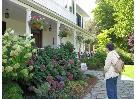 C. H. Bailey House: Hydrangea in the front of the CH Bailey House