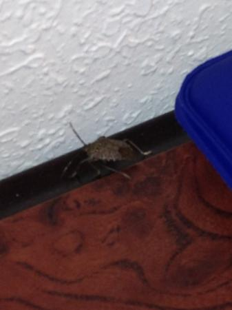 Comfort Inn & Suites Airport Dulles-Gateway : hotel bug says good morning