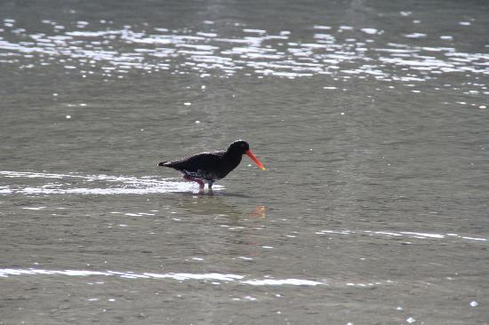 Whangamata Beach: Birdwatching