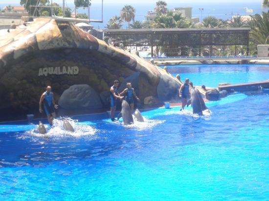 Aquapark Octopus: en el delfinario
